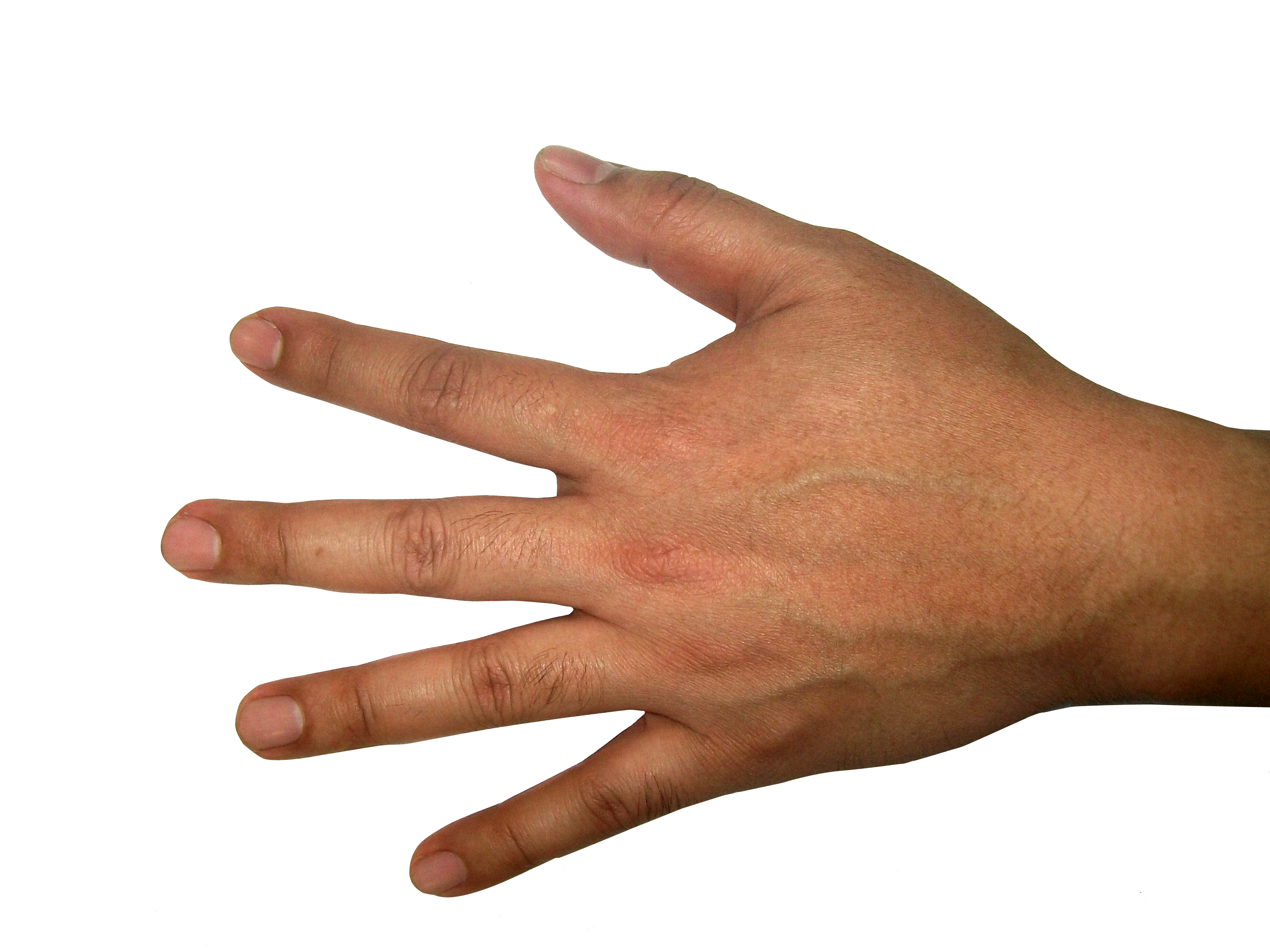 clip art royalty free download Five finger hand png. Hands clipart forearm