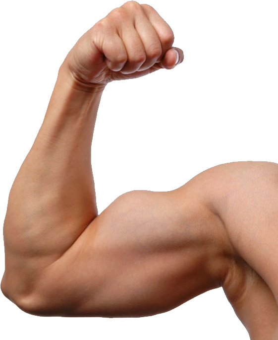 png royalty free download Arms transparent. Muscle arm png image