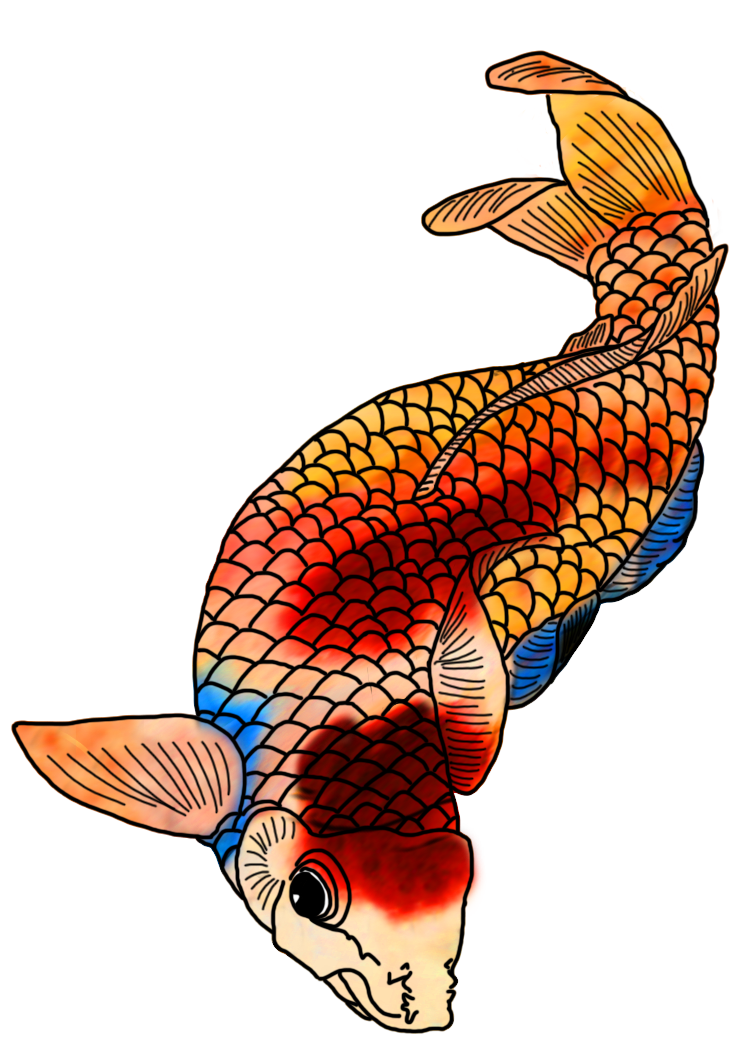 png freeuse library Colorful Koi Fish Drawings