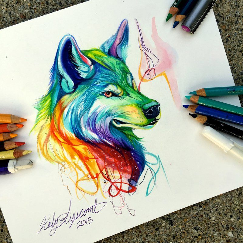 picture library download Colorful drawing animal. Wolf colored pencil and