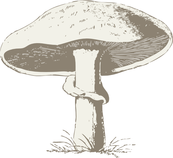 clipart transparent library Mushroom Clip Art at Clker