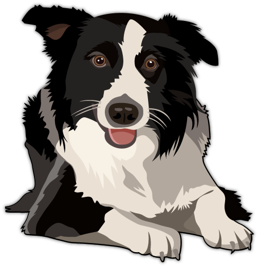 clip art black and white Border Collie Vector