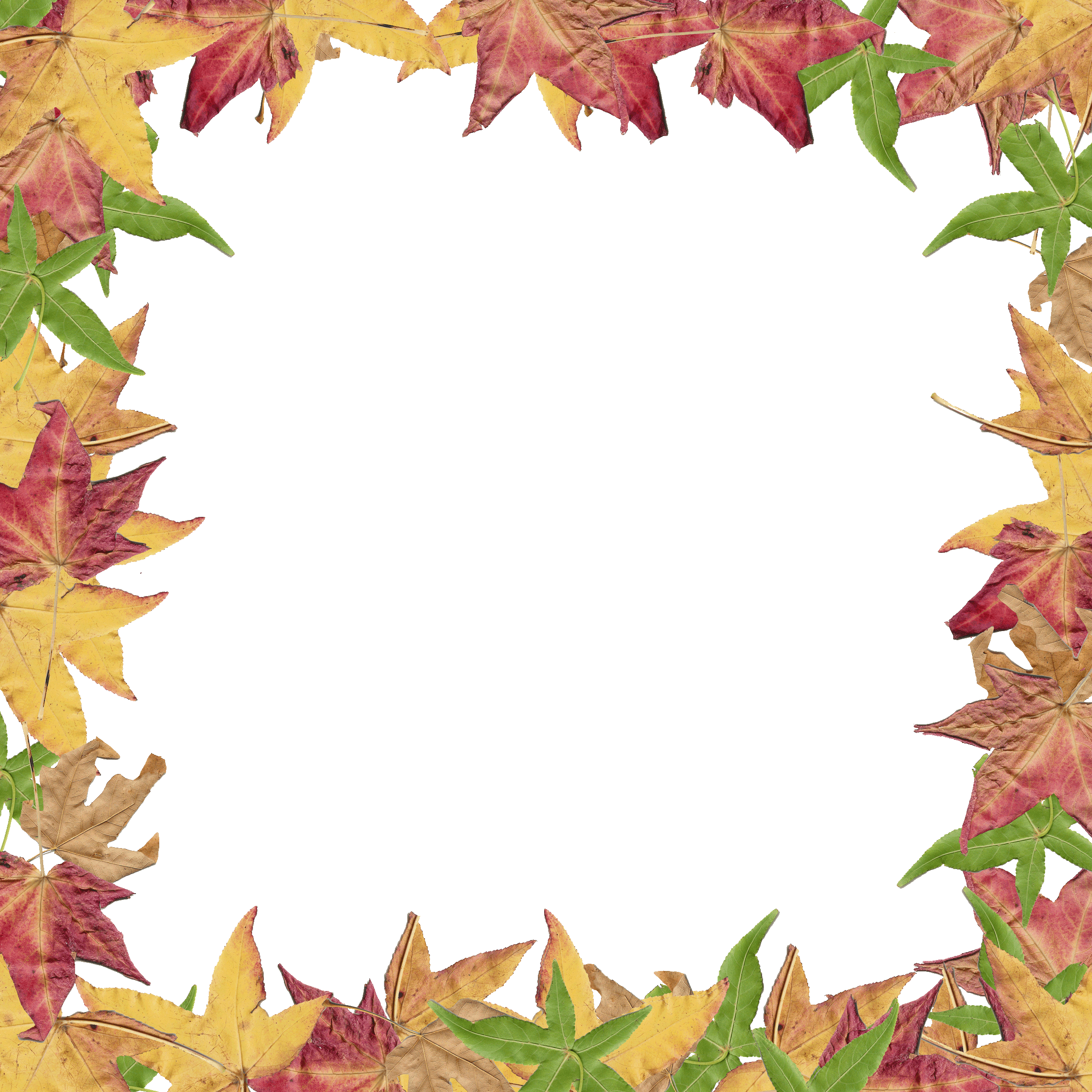 jpg stock Leaves overlay png inspirations. Autumn border clipart