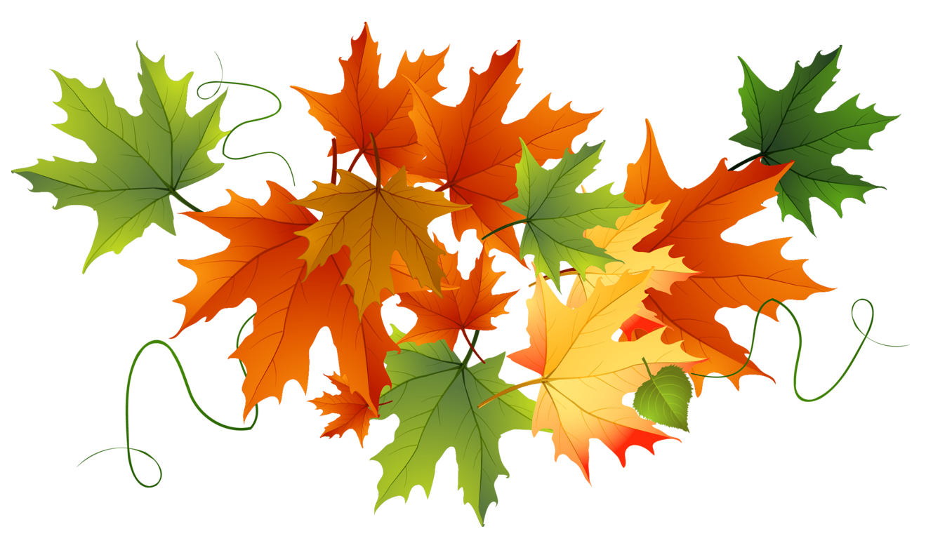 vector freeuse Autumn Transparent Leaves
