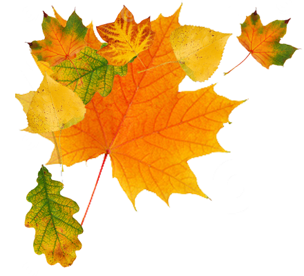 clip transparent download Autumn leaves clipart transparent background. Png images free yellow