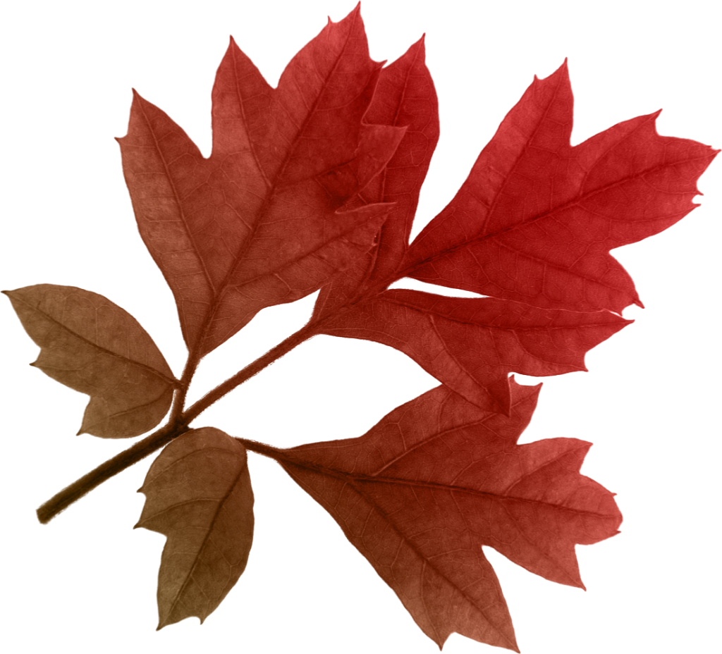 clip free download Autumn leaves clipart transparent background. Png images free download