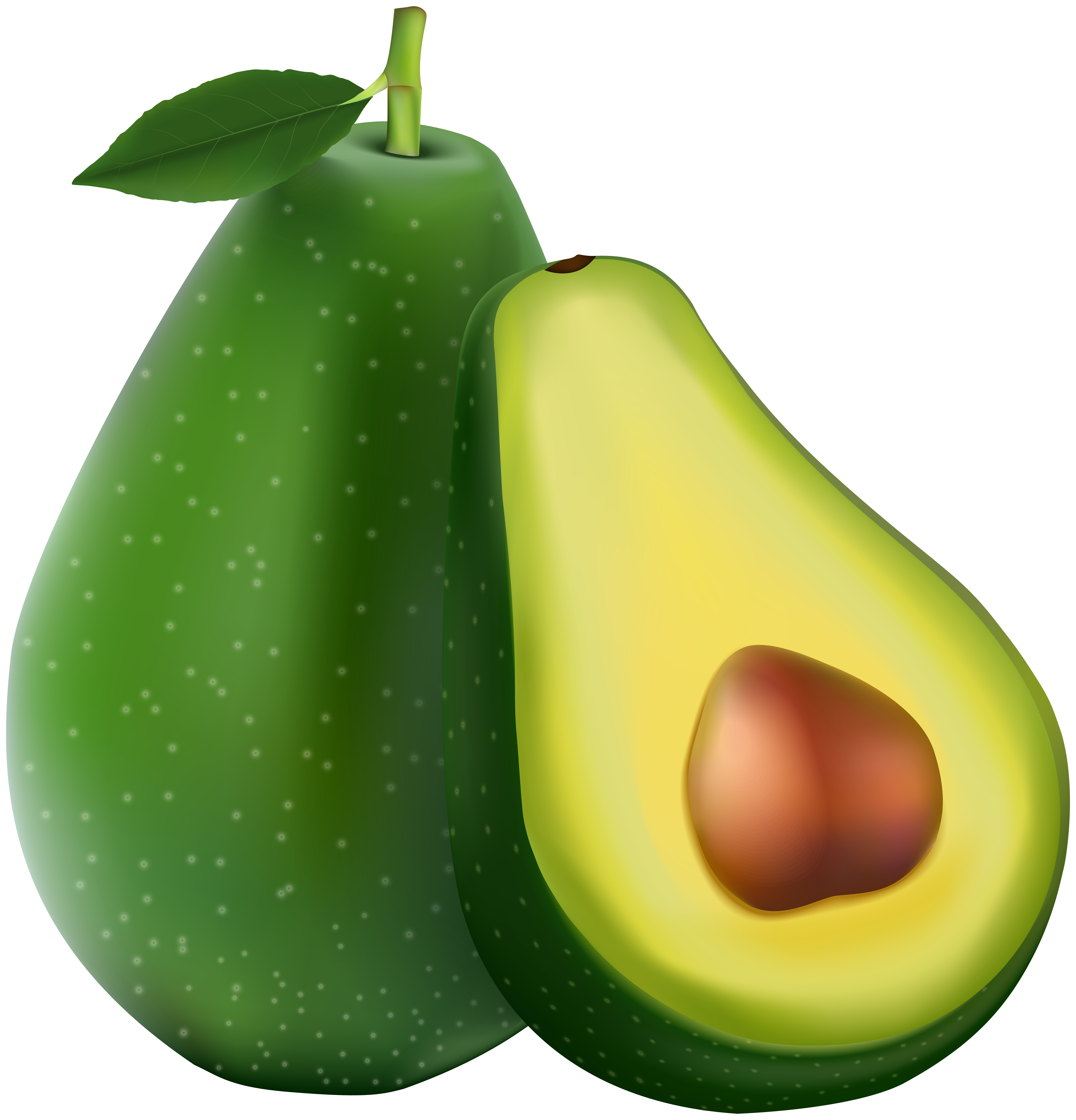 vector library Avocado clipart. Transparent png image gallery