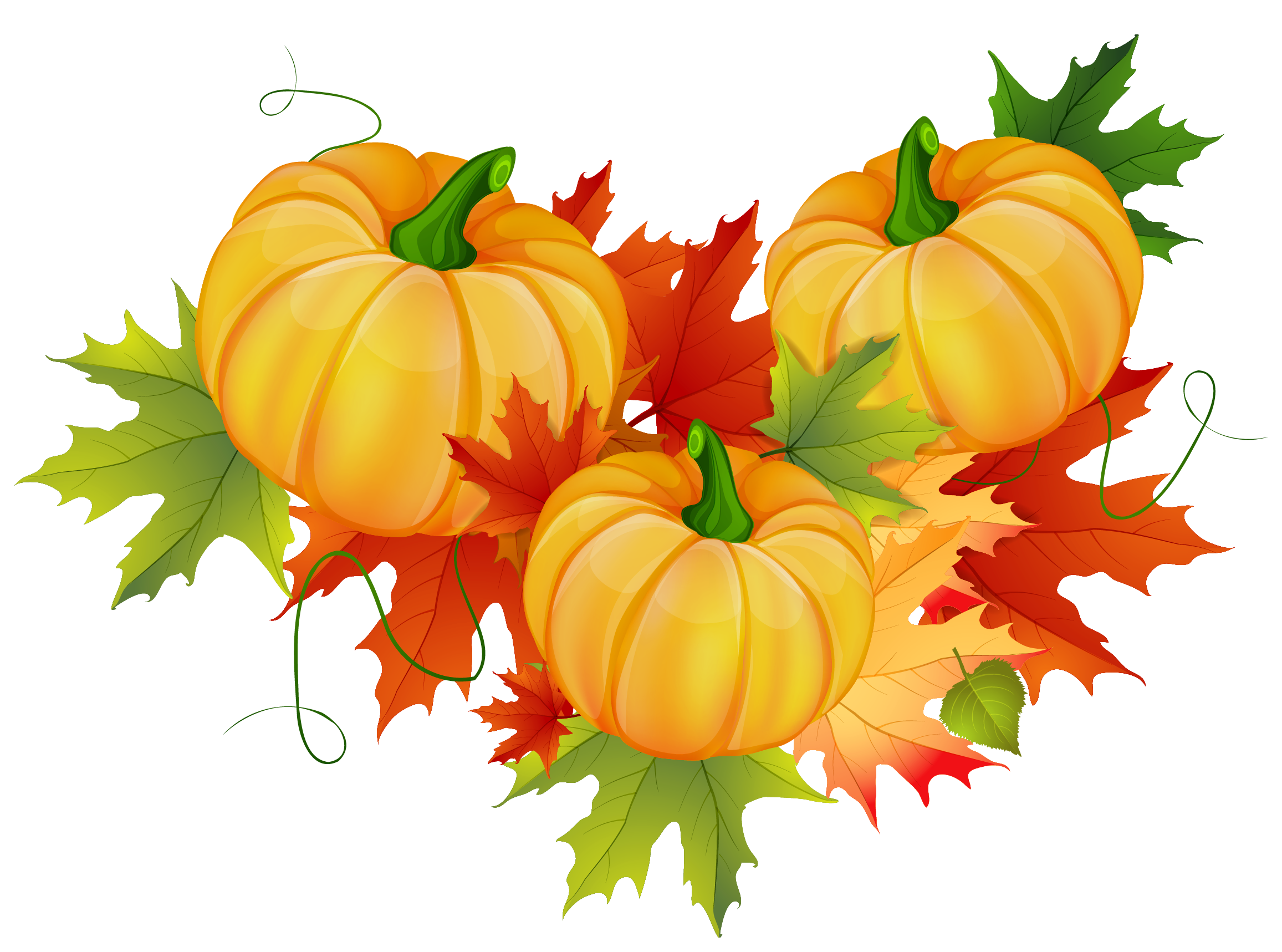image freeuse download thanksgiving pumpkins clipart #66890657