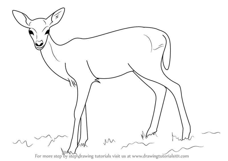 clipart free Learn how to draw. Drawing deer baby
