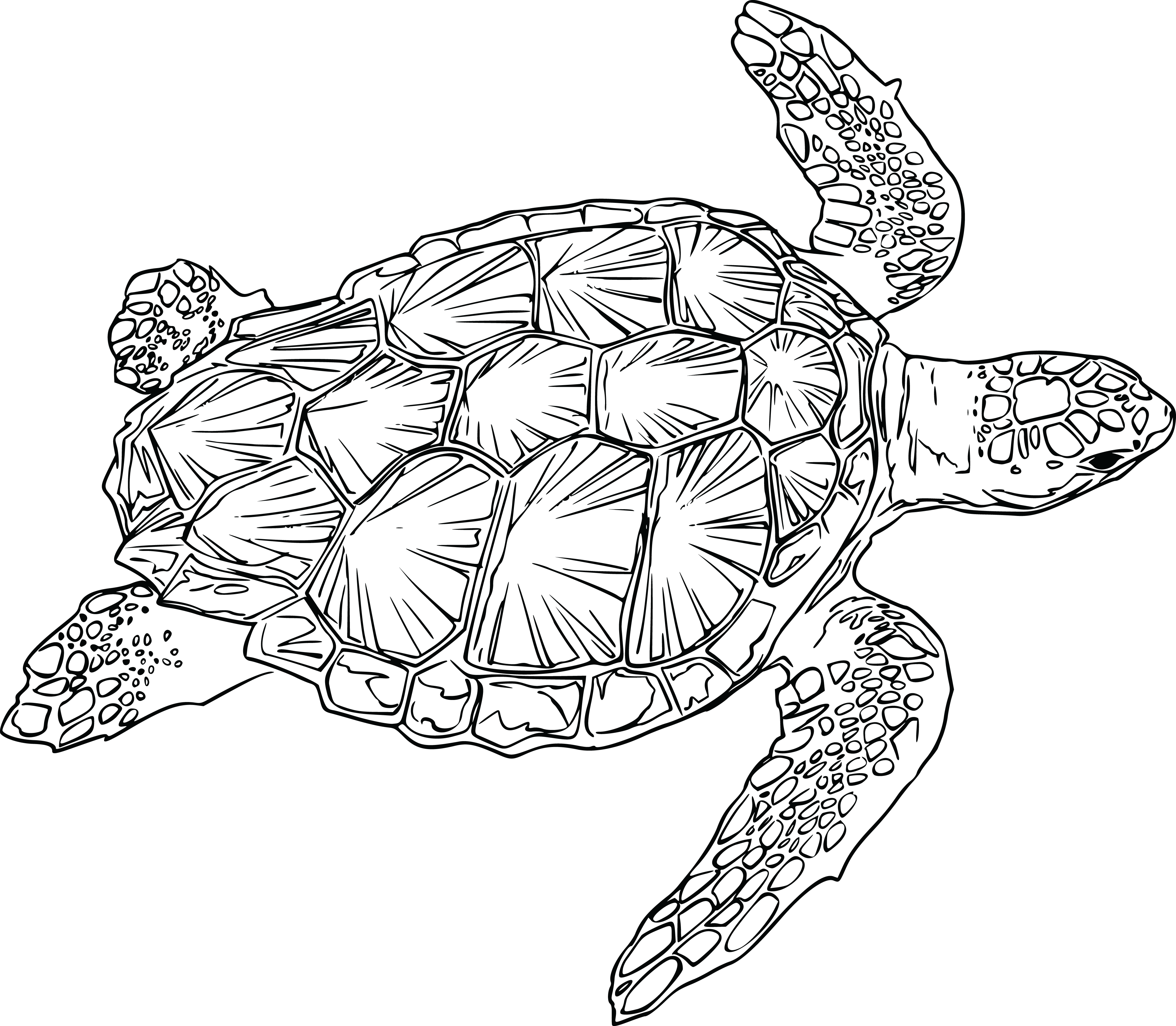 picture free library  beautiful clip art. Baby sea turtle clipart