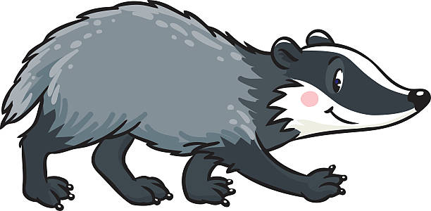 vector free library Station . Badger clipart