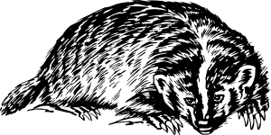 jpg transparent stock Clip art at clker. Badger clipart