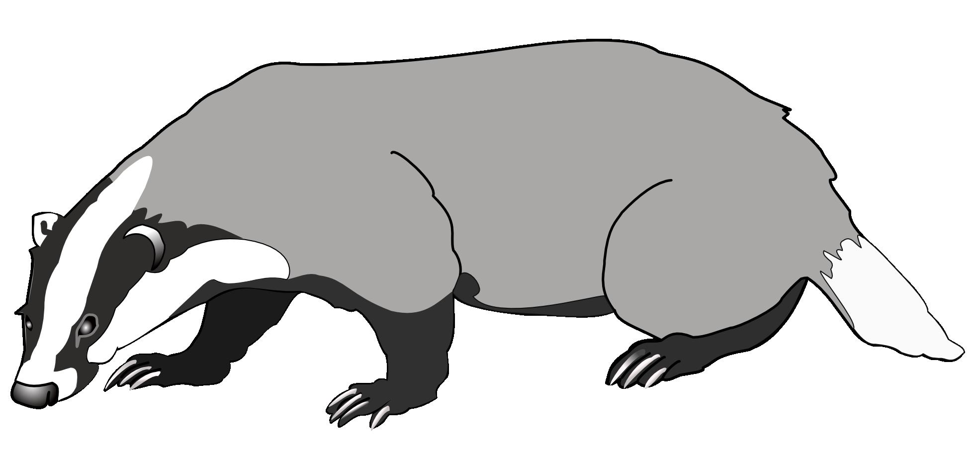 black and white stock Badger