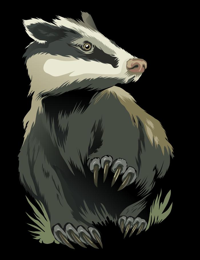 royalty free Badger clipart clip art. Image free qvbefi png.