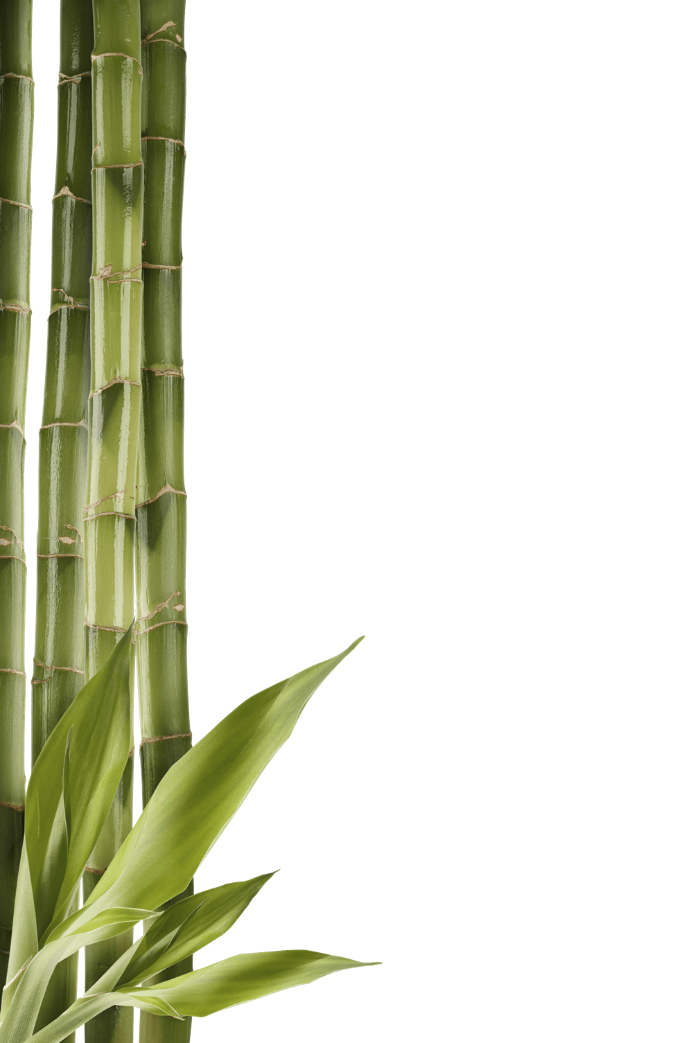 image stock Left side png stickpng. Bamboo transparent