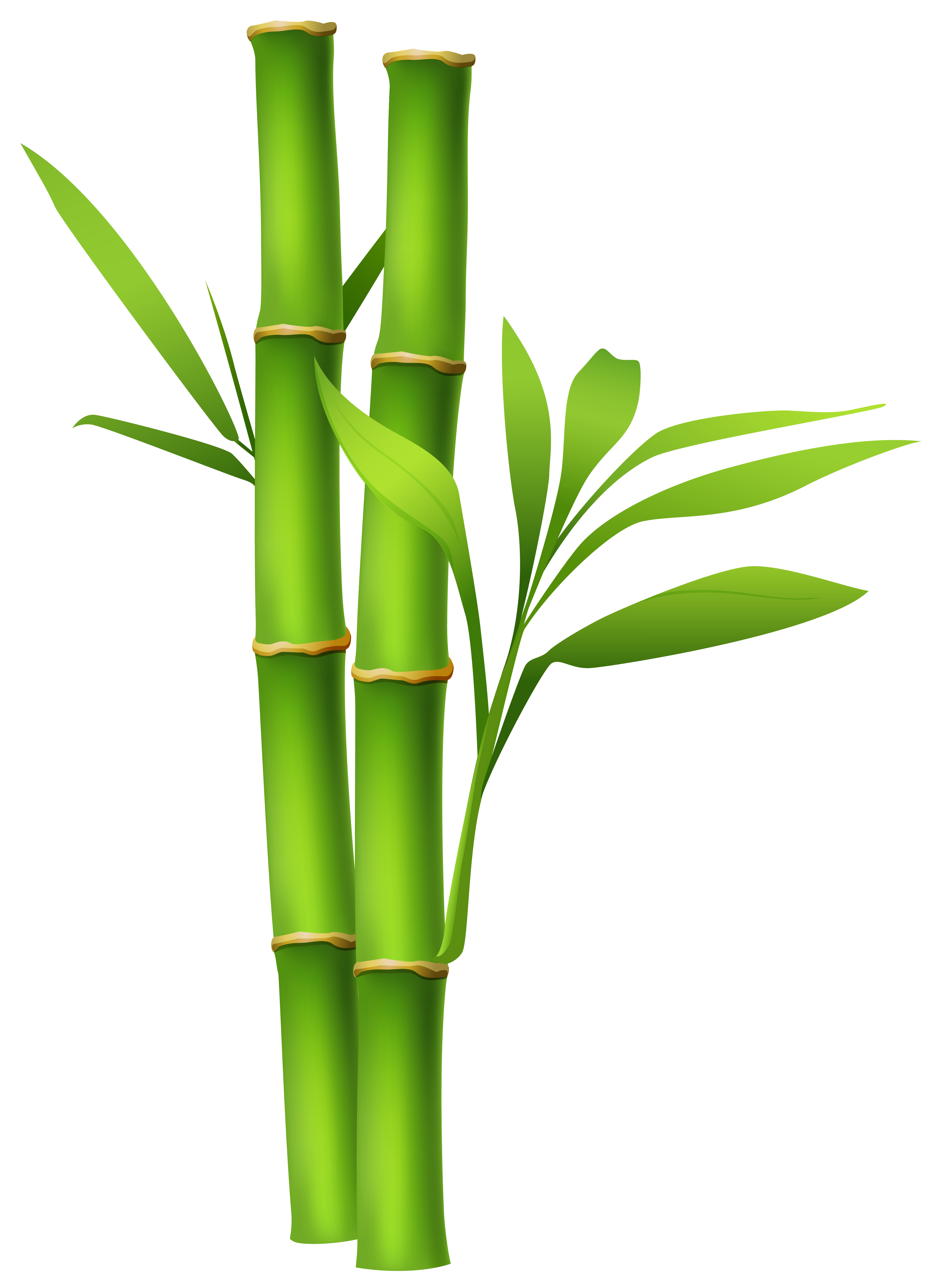 jpg library stock Bamboo clipart. Png image gallery yopriceville.