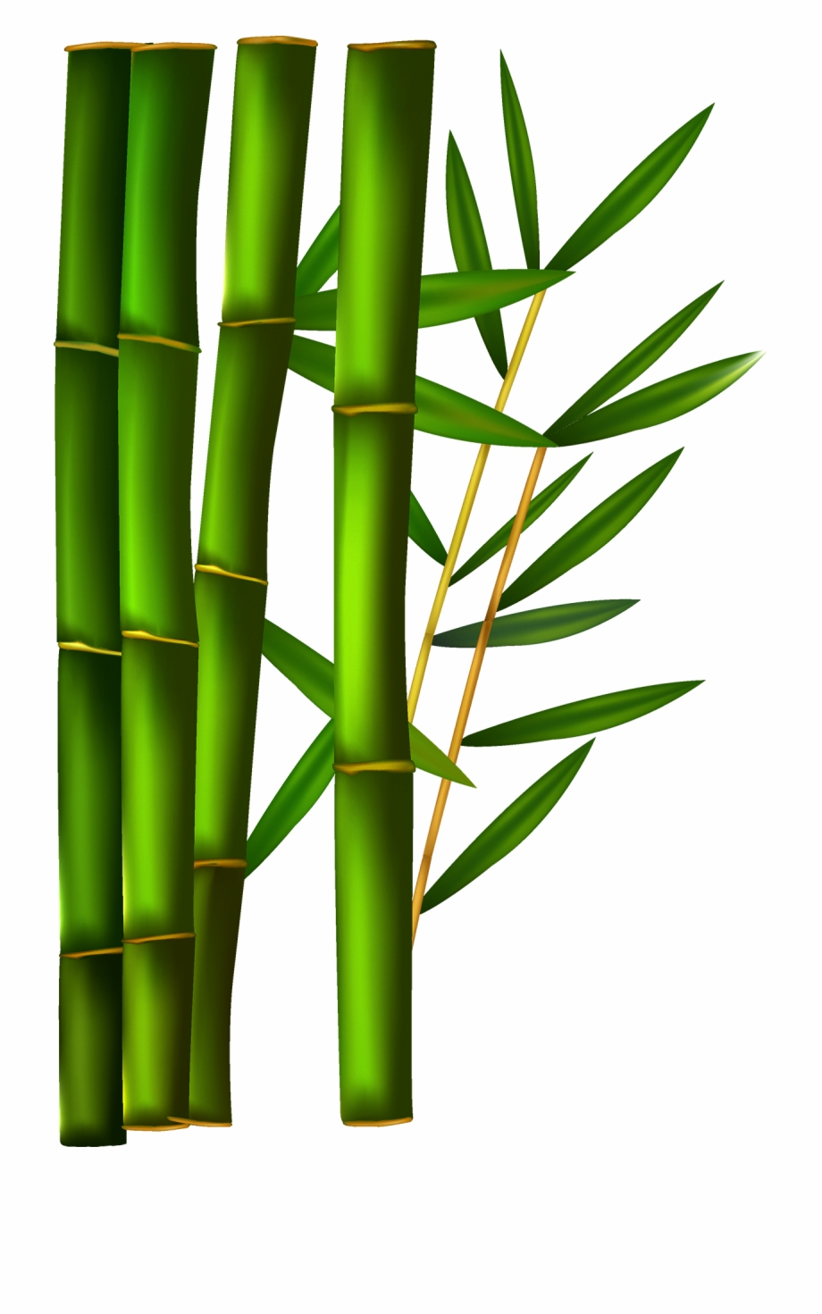 graphic Bamboo clipart. Transparent background free png.