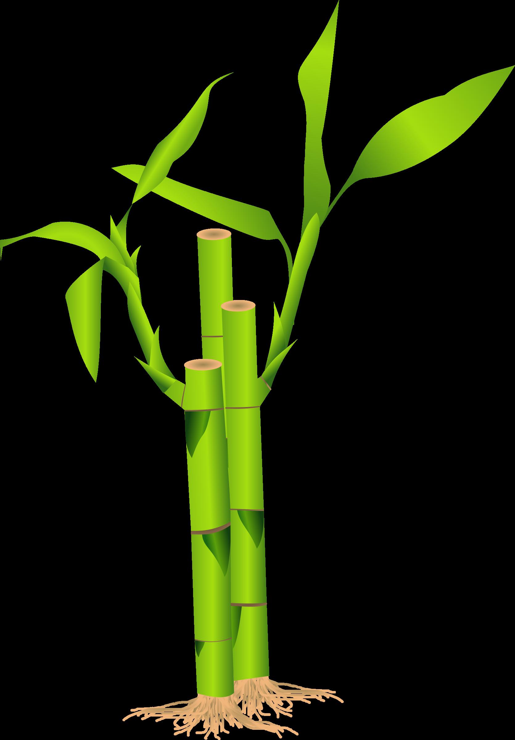 jpg royalty free Big image png. Bamboo clipart.