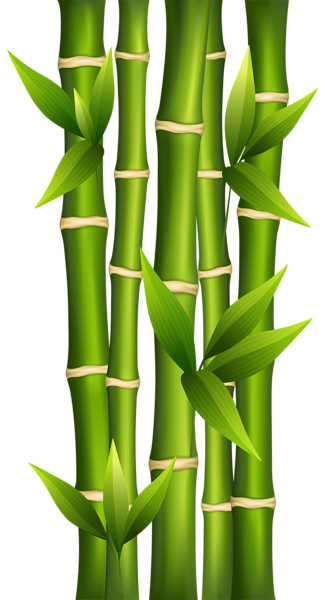 banner library library Bamboo PNG Clipart Image