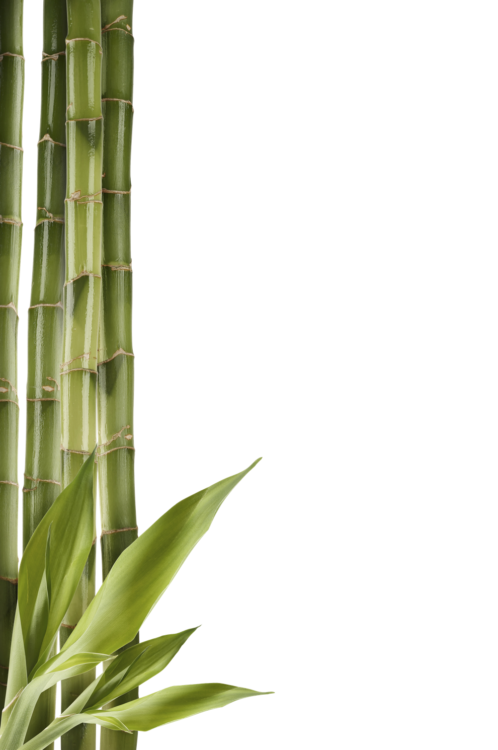 png freeuse stock Stem clipart shoot free. Bamboo transparent real