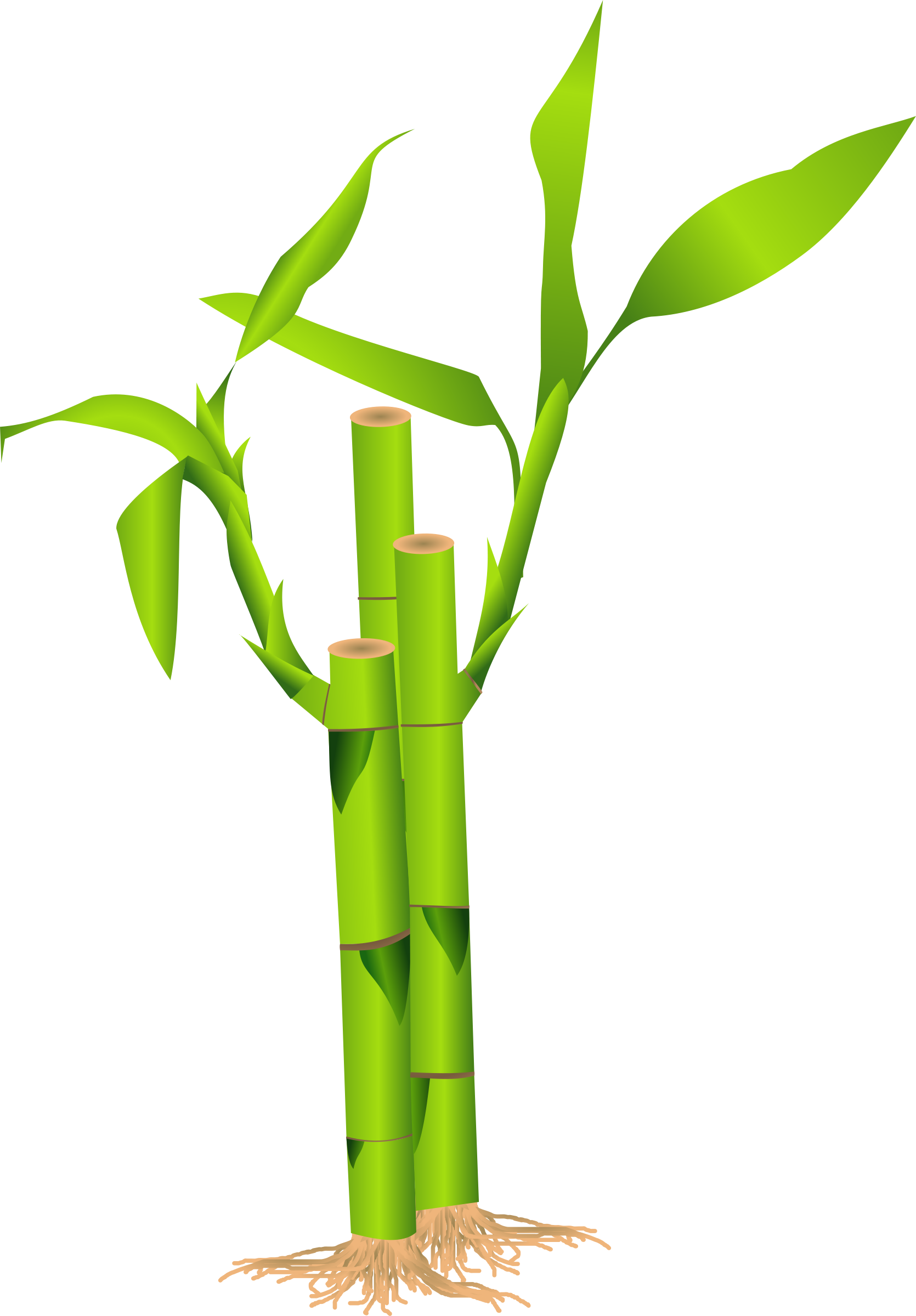 vector freeuse stock Clipart . Sugarcane drawing bamboo stick