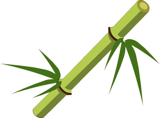 jpg transparent Sugarcane drawing bamboo stick. Clipart short free on