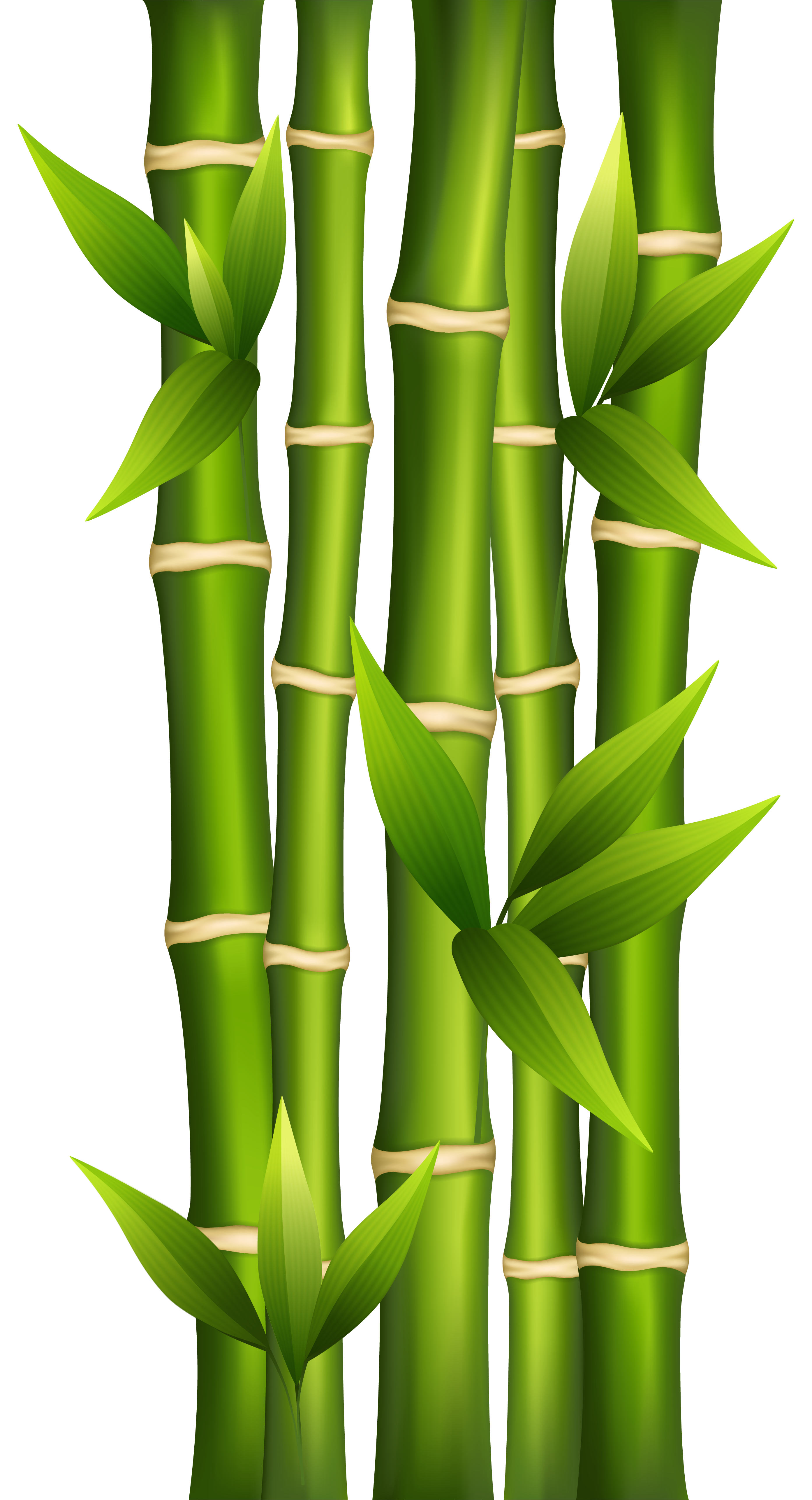 jpg freeuse library Png image gallery yopriceville. Bamboo clipart.