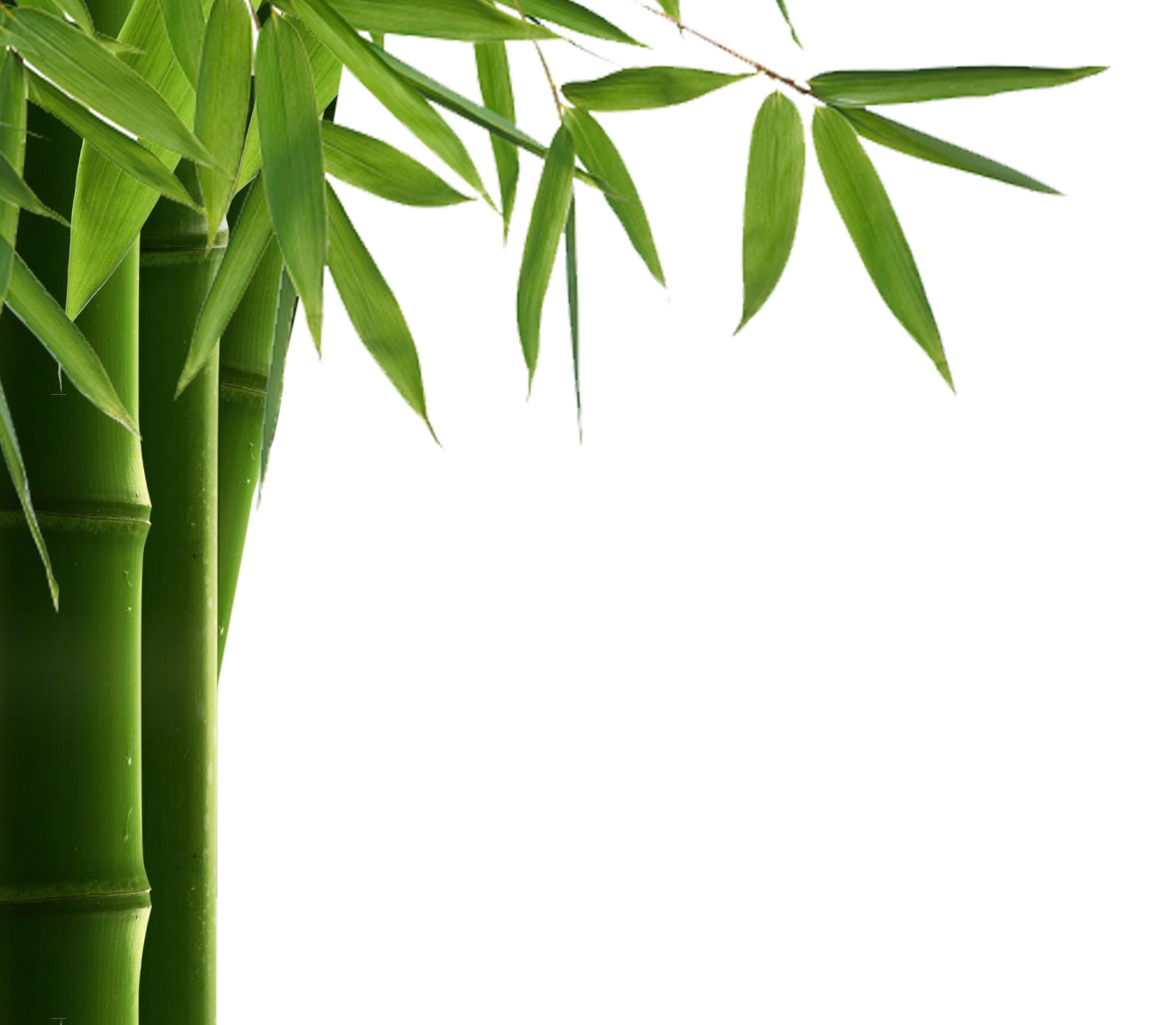 jpg black and white library Bamboo transparent leaves. Png hd images pluspng