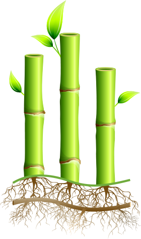 clipart library download Bamboo Facts