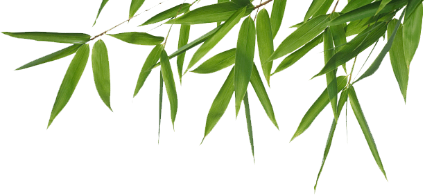 jpg stock Header png stickpng. Bamboo transparent