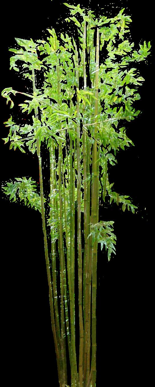 vector library stock Jquery aquarium sule m. Bamboo transparent animated