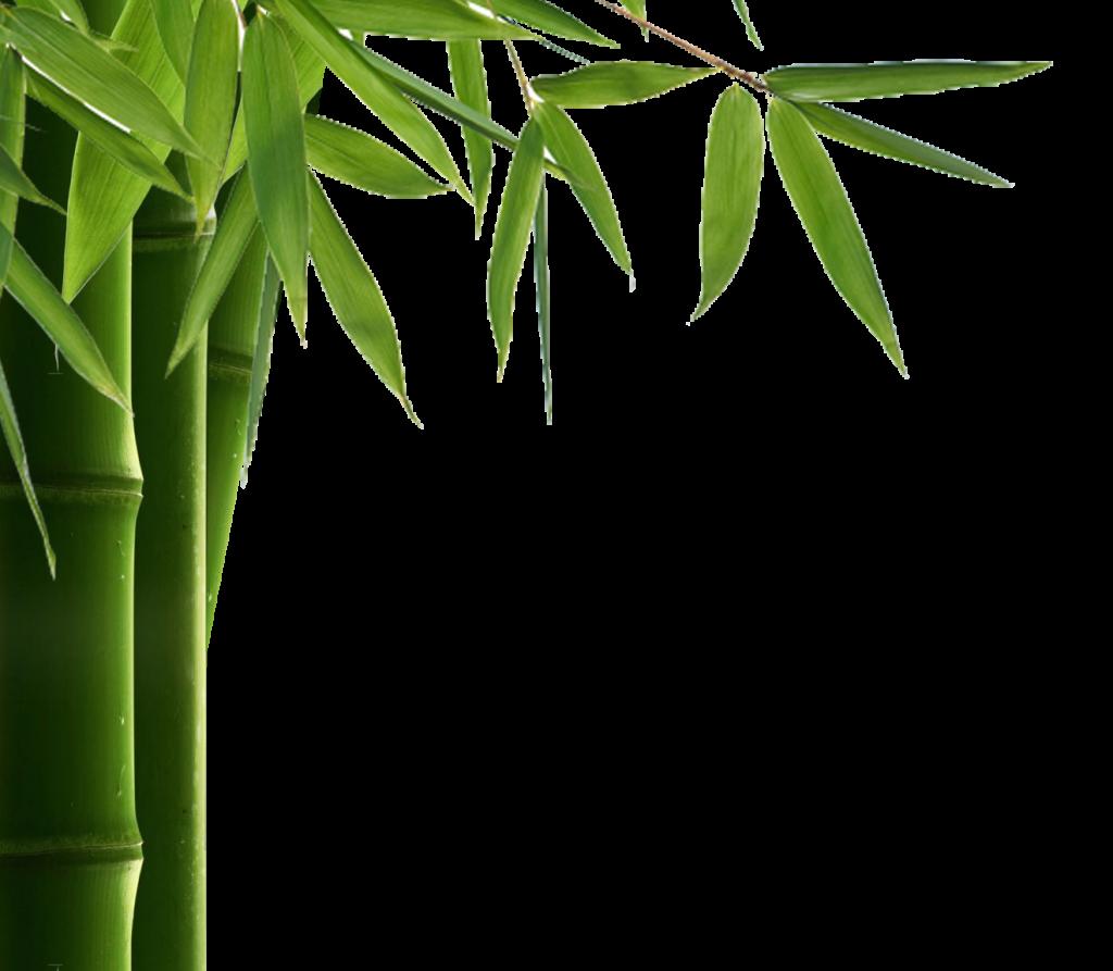 svg freeuse stock Bamboo transparent border. Leaf png hd peoplepng