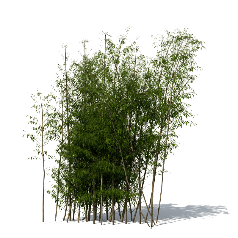picture freeuse library Png mart. Bamboo transparent file