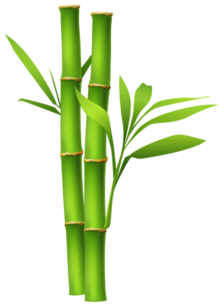 royalty free download Bamboo transparent free vector. Png images only clipart
