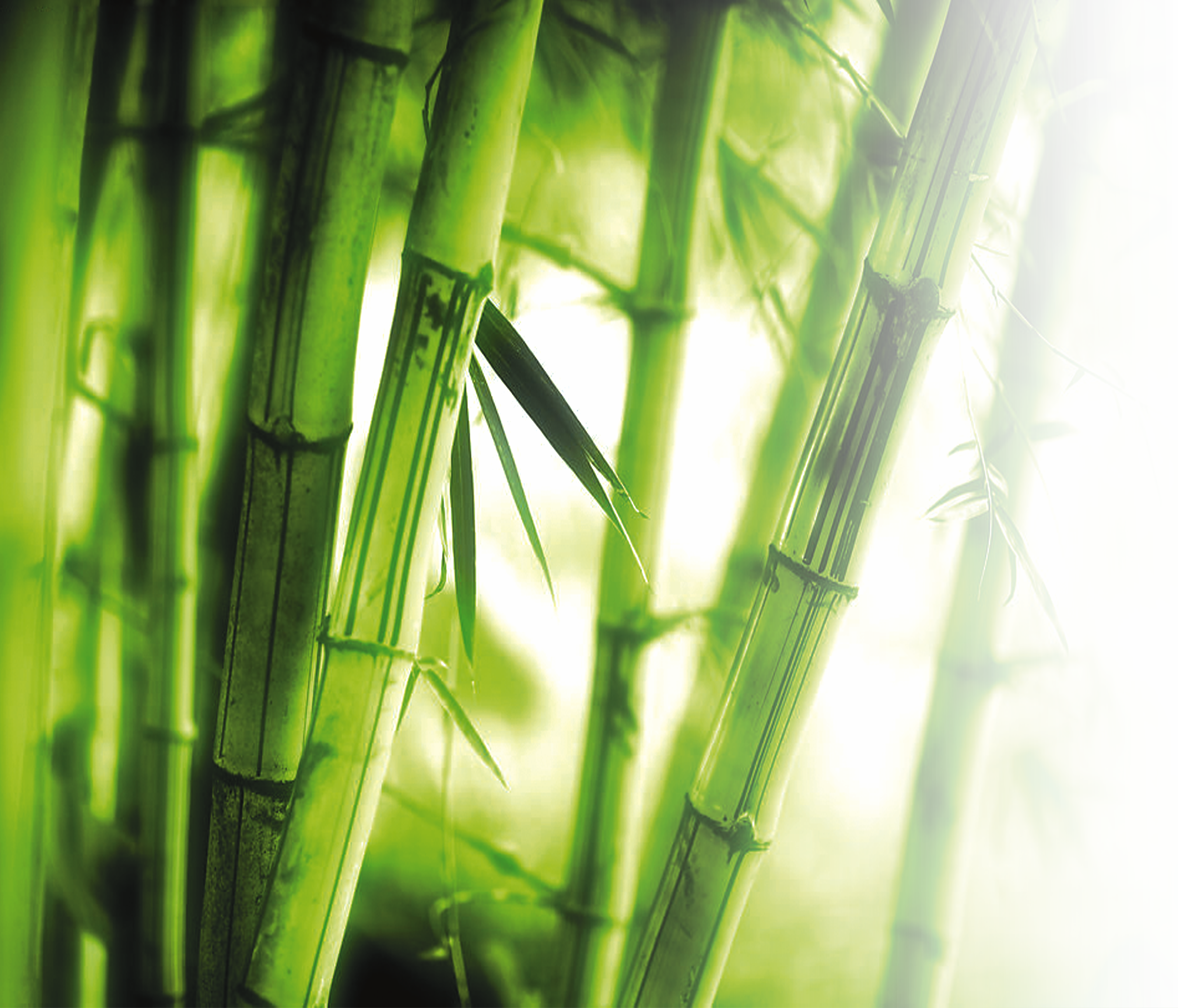 png library library Bamboo transparent high resolution. Wall p definition television