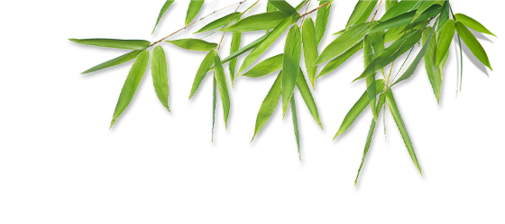 png freeuse library Bamboo transparent leaves. Png images pluspng