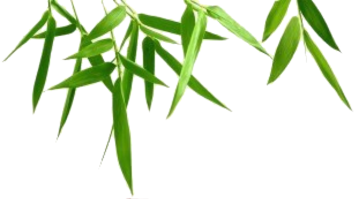 clip freeuse download Leaf background png mart. Bamboo transparent leaves