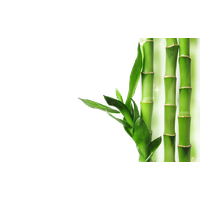 banner Download free png photo. Bamboo transparent nature