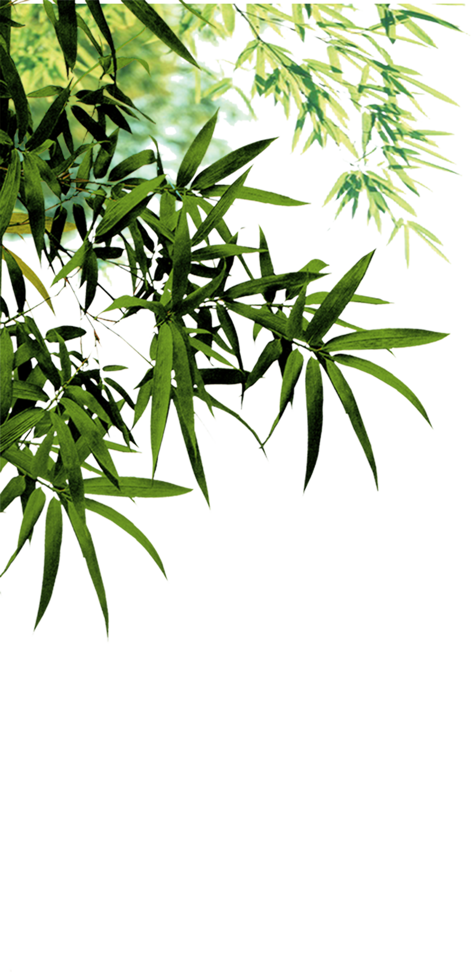 clipart library Bamboo transparent plant leaves. Anji county charcoal software