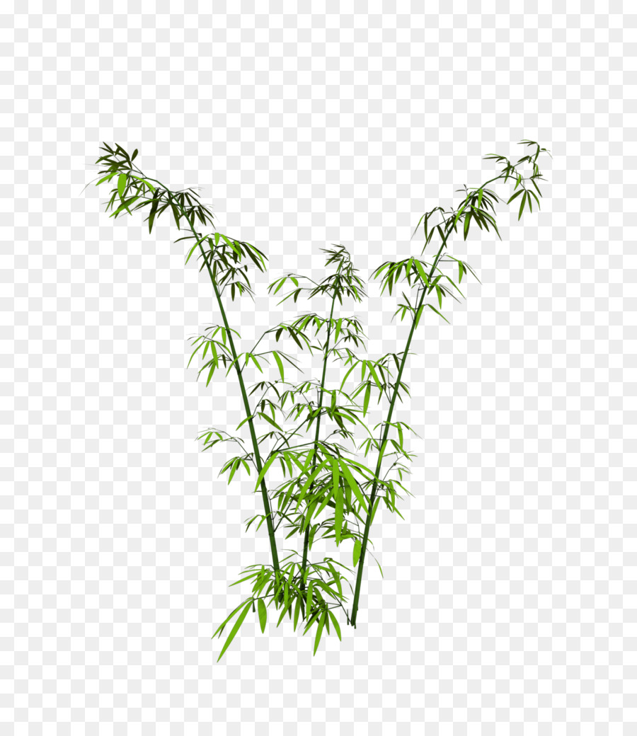 jpg free download Bamboo transparent real. Green grass background png