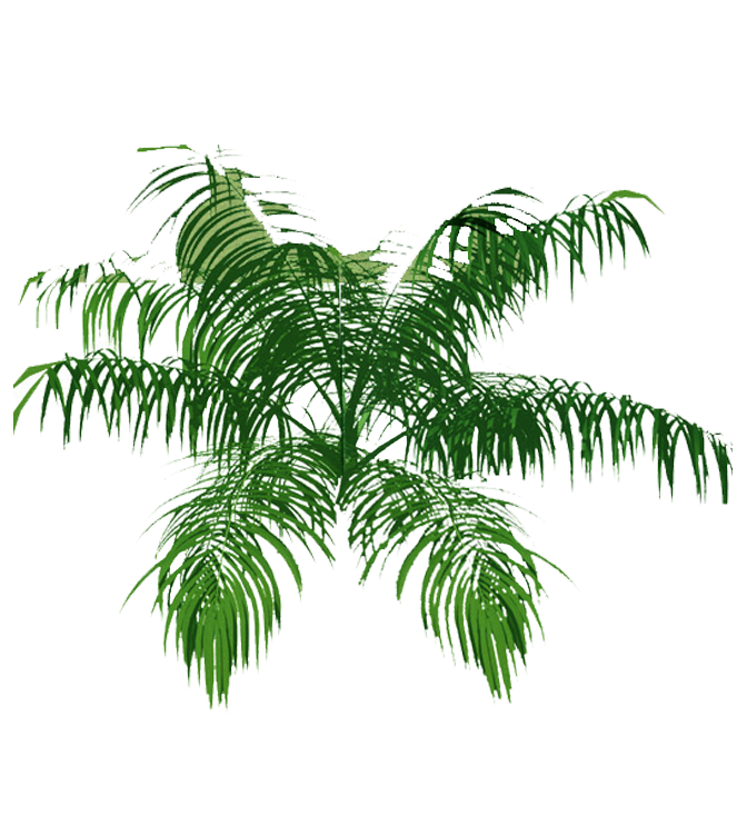 picture black and white stock Bamboo transparent sketchup. Cp paurb palm tree