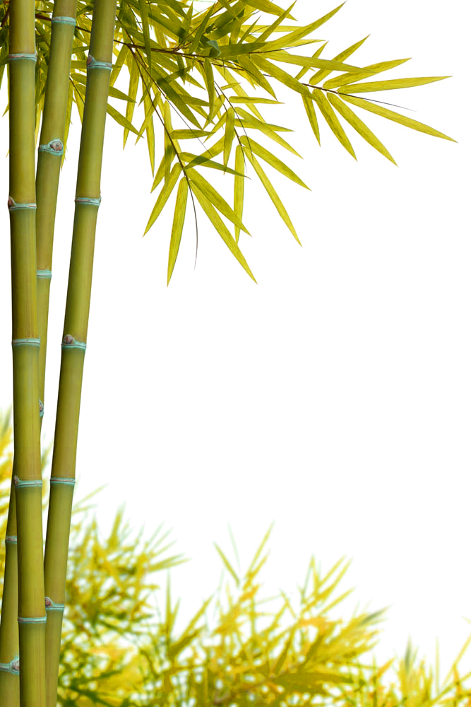 jpg free download Bamboo transparent yellow. Stock photography bamboe green