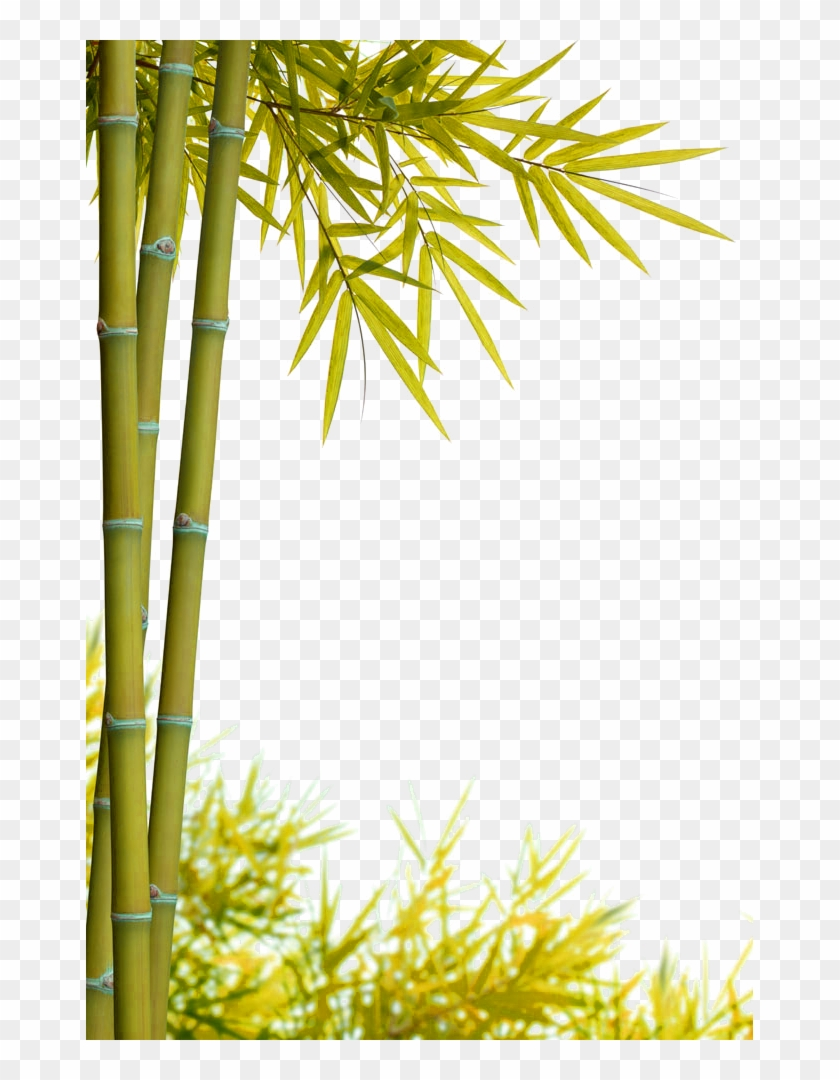 clip royalty free library Jpg free download hd. Bamboo transparent yellow