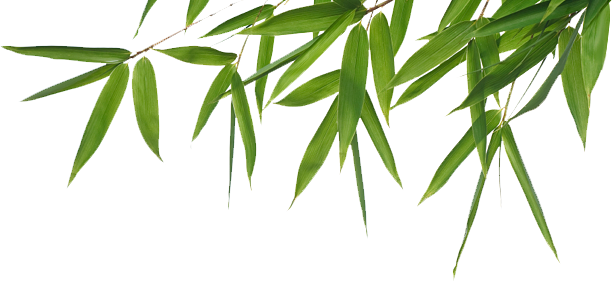 clip art transparent stock Png images all free. Bamboo transparent high resolution
