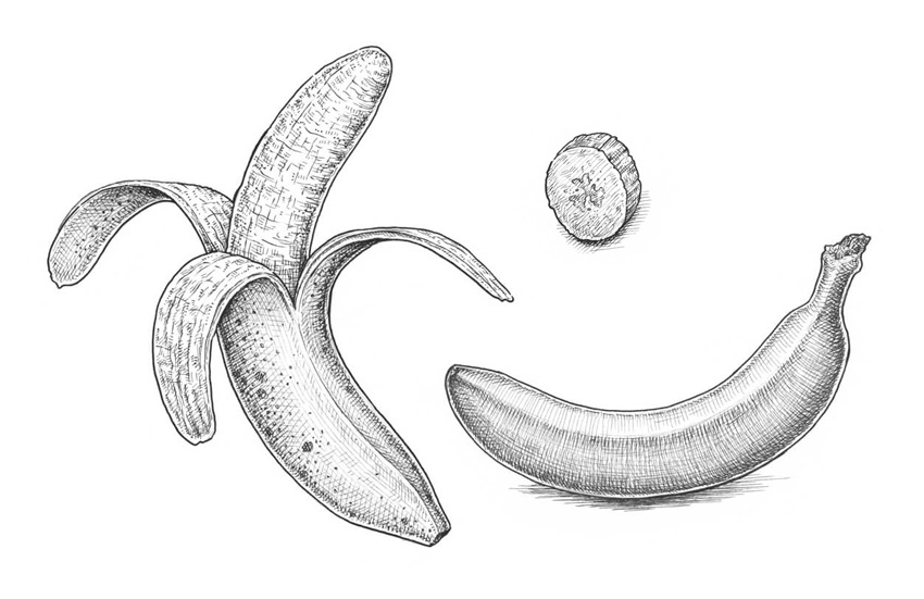 svg download Bananas drawing cross hatching. How to draw a