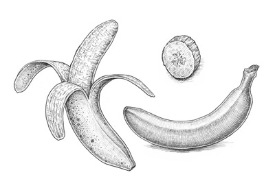clip library library Bananas drawing cross hatching. How to draw a