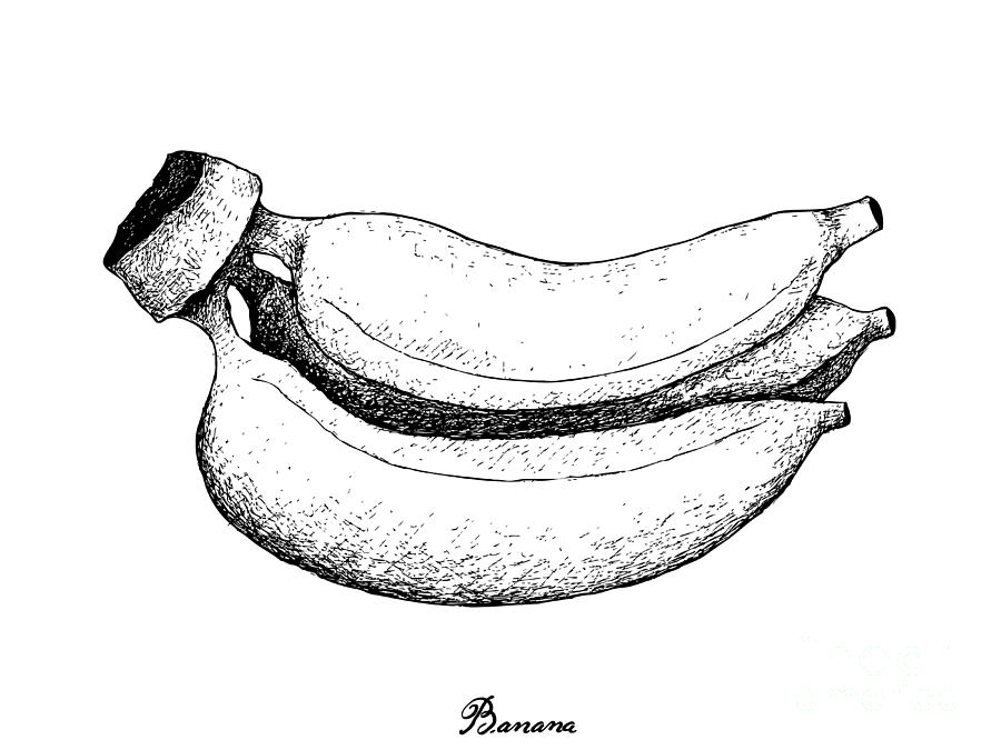 picture freeuse stock Bananas drawing hand drawn. Of fresh ripe golden