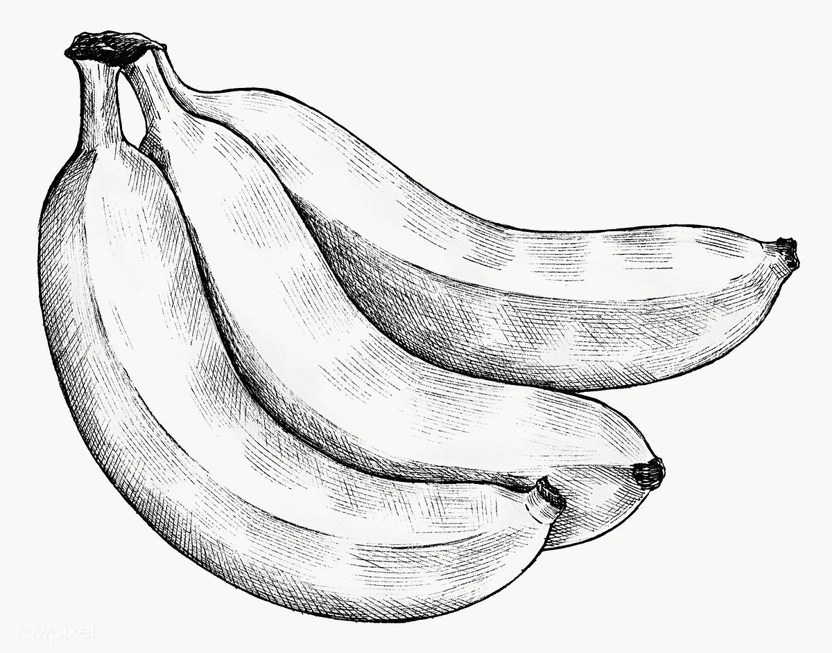 clipart transparent stock Bananas drawing ink. Free stock illustration