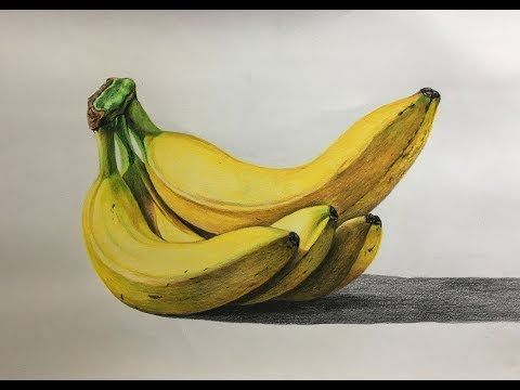 banner transparent Bananas drawing realistic. In color pencils banana