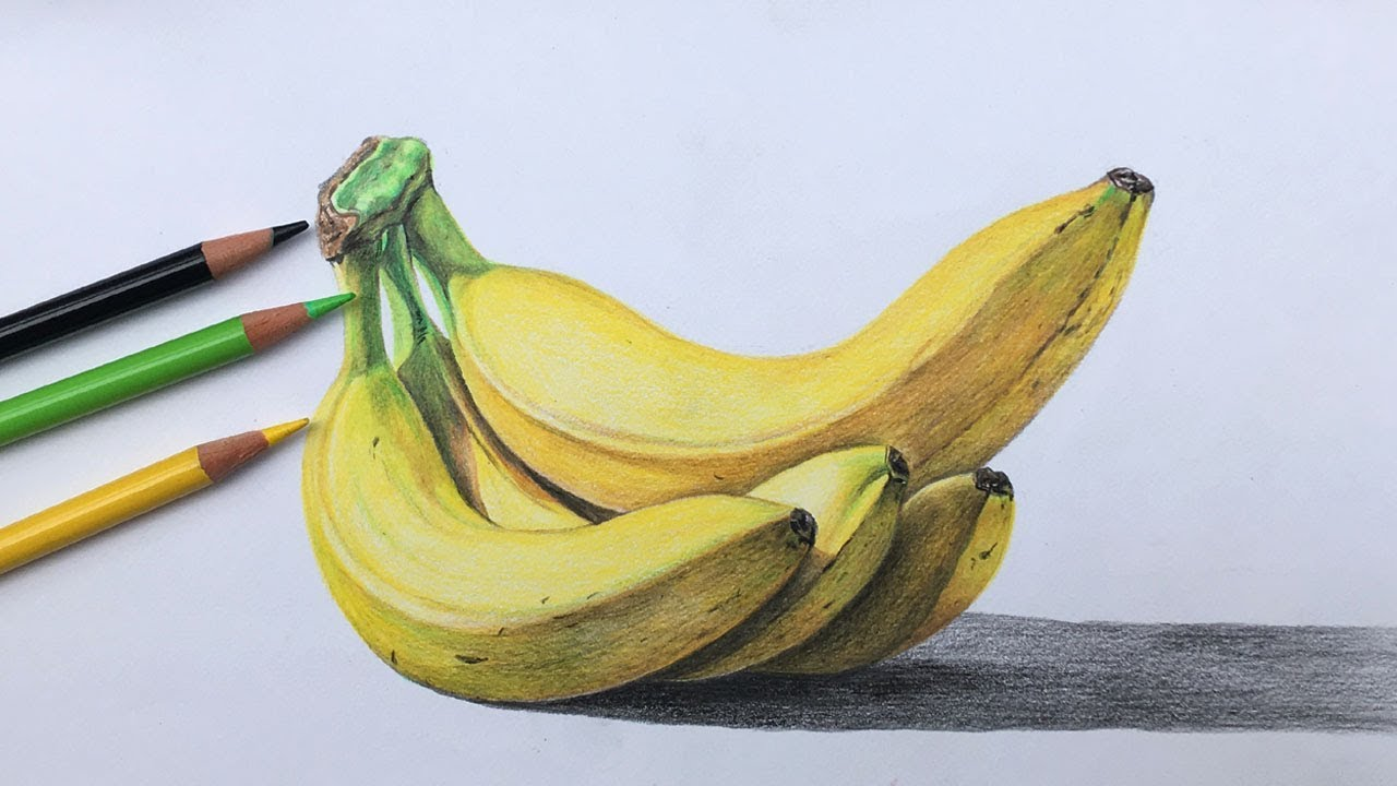 banner library download In color pencils banana. Bananas drawing realistic